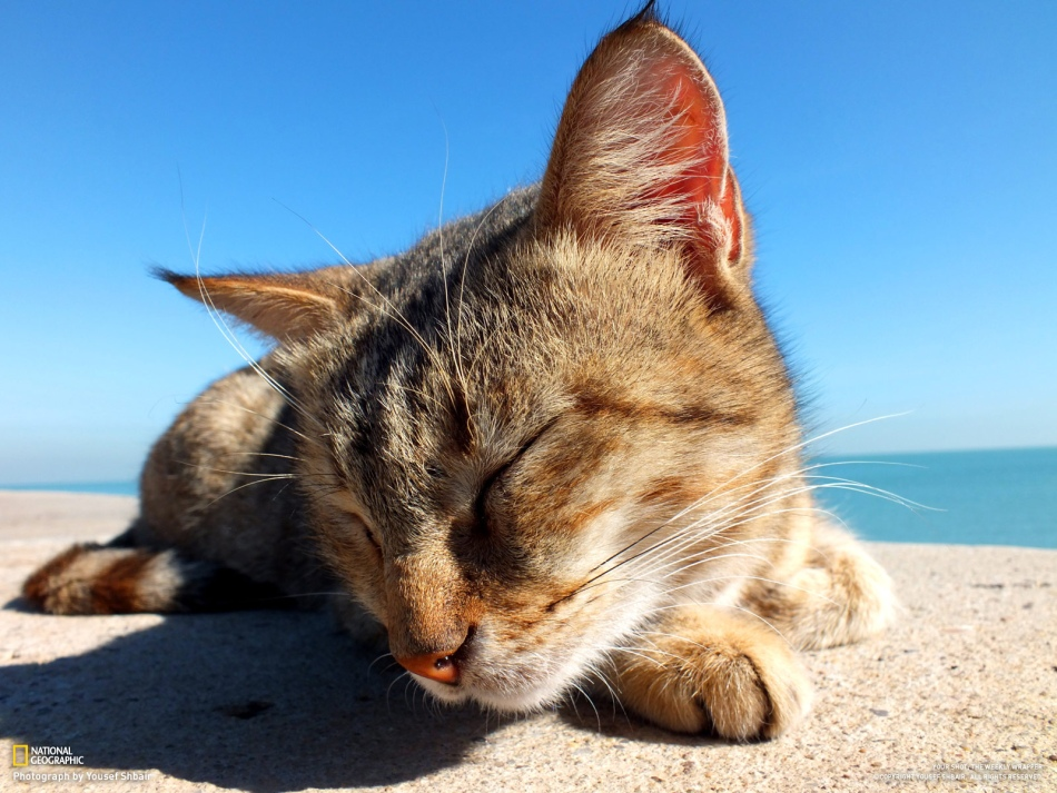 I was taking some photos of the sea and the seagull and suddenly this cat appeared and just lay next to me. I think the cat was saying, take some photos for me, please. Photo and caption by Yousef Shbair