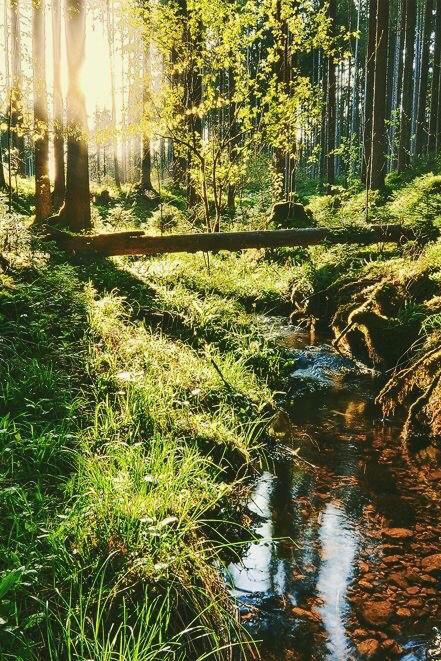 фото природа красивые картинки