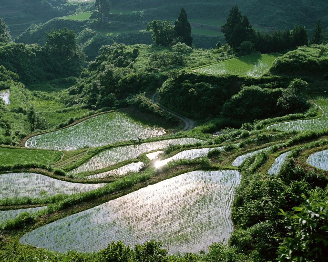 Япония, пейзажи, природа, памятники, парки, сады, ворота, фонари, торо, храмы, красивые, обои, скачать, |, Japan